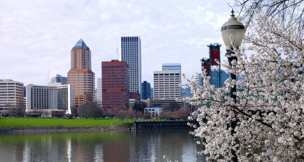 A tree blossoms in the foreground while across the water is a view of the cityscape.