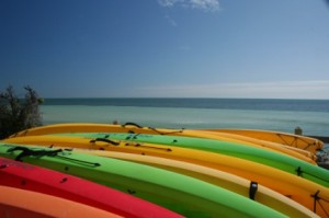 A row of kayaks lined up on the shore.