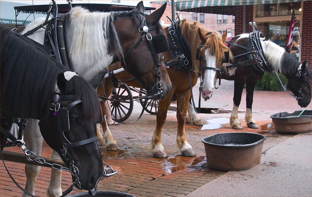 Carriage horses in harnesses and blinders drink from tubs as they await riders.