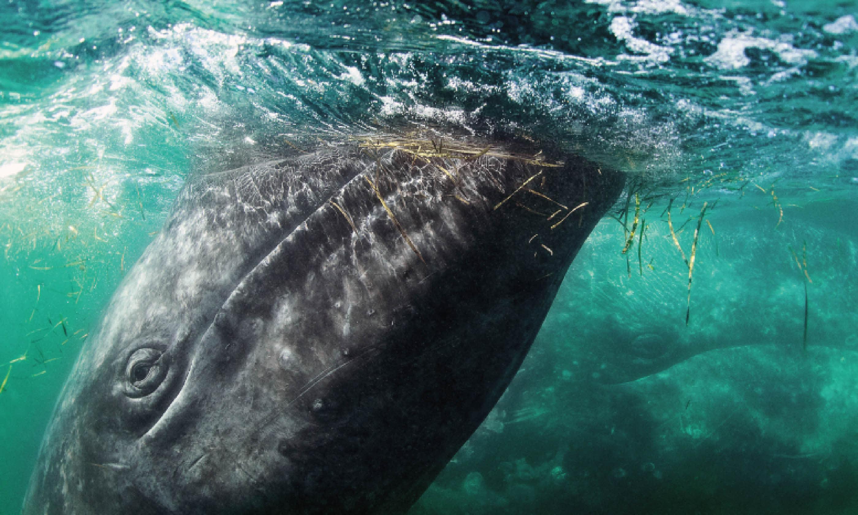 Whale watching (Photo: Mark Carwardine)
