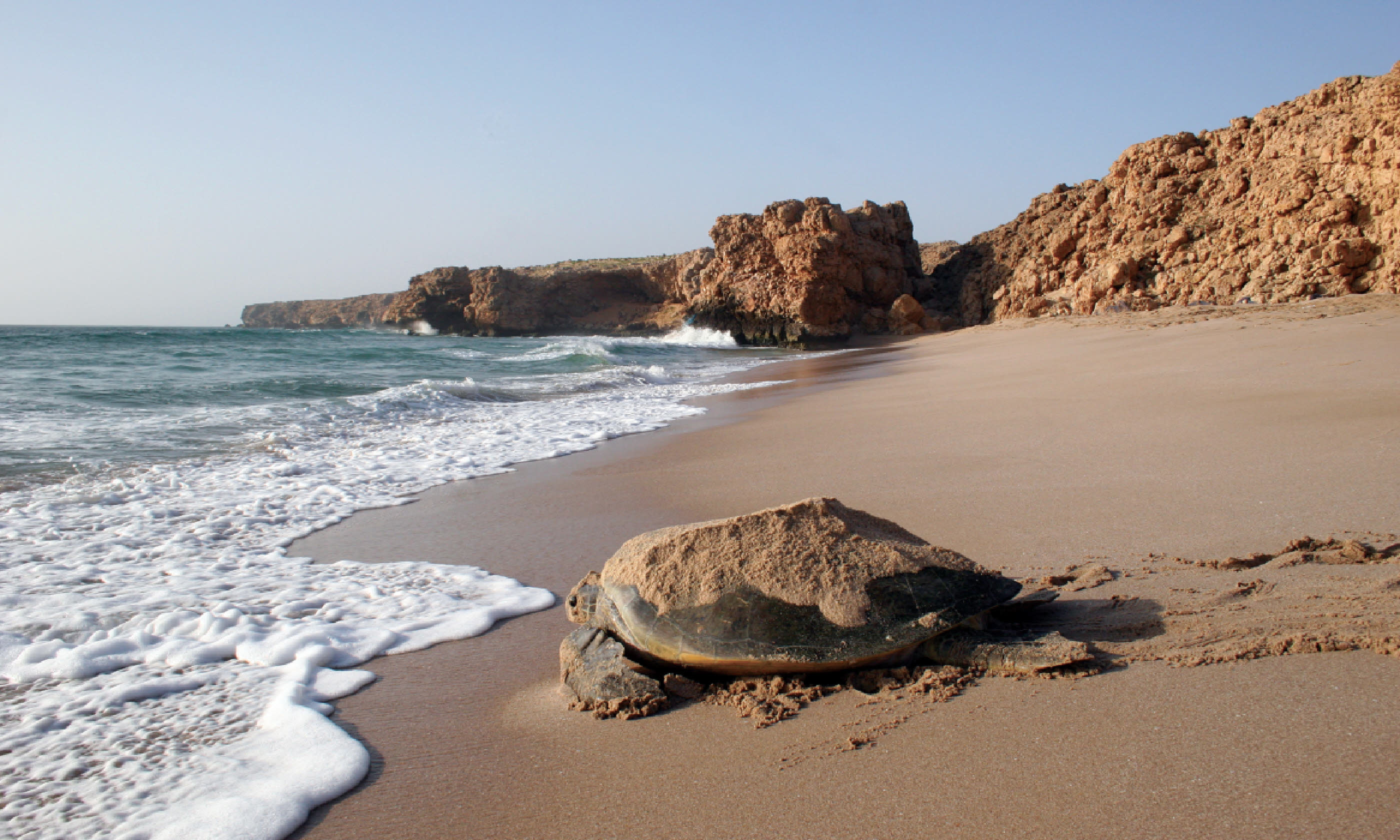 Turtle watching, Ras Al Jinz