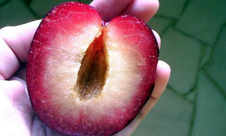 Romanian plum