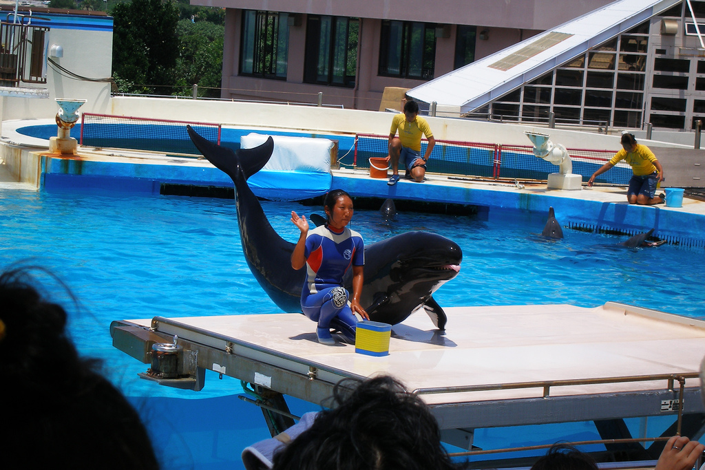 Churaumi aquarium dolphin show
