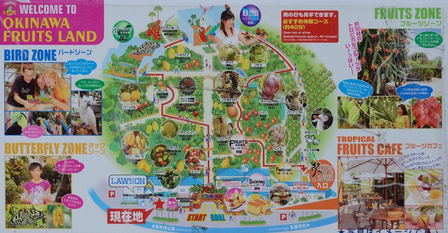 Okinawa Fruits Land Fruity Map