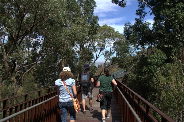 kings park treetop walk