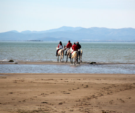 Horse Riding in the Delta de l-Ebre