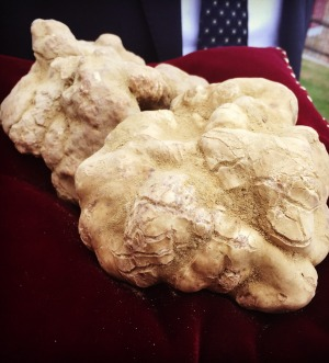 One of the world's biggest white truffles sold last year for 100,000 euro.