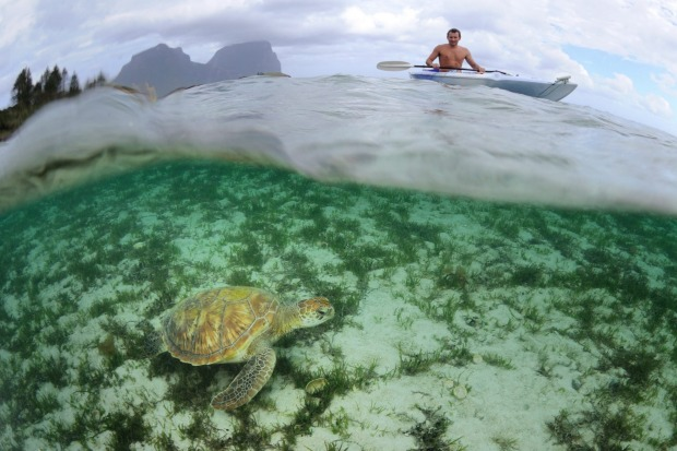 Marine sanctuary: There is nowhere else quite like this wildlife haven.