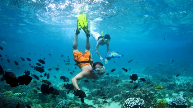 Underwater world: Snorkeling at North Bay, Lord Howe Island.