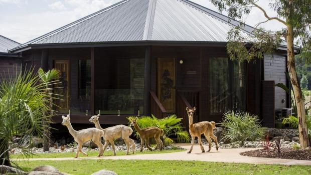 The entrance to the giraffe treehouses at Jamala Wildlife Lodge.