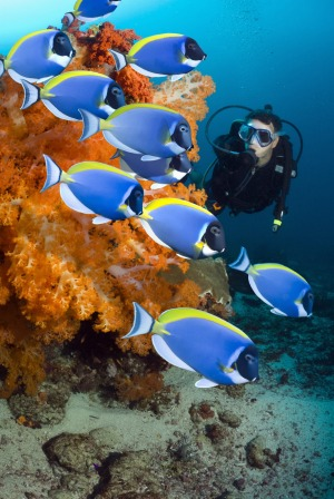 A diver checks out the tropical reef fish.